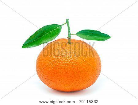 Valencia Oranges 5