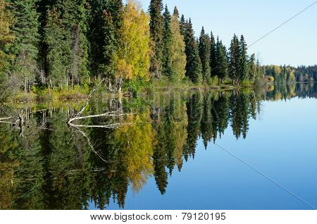 Forest Reflection In Lake