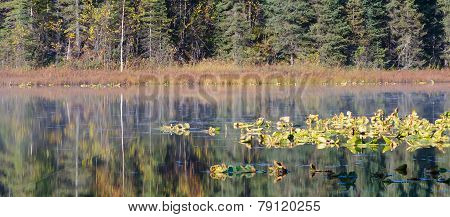 Lilly Pads Reflected In Lake