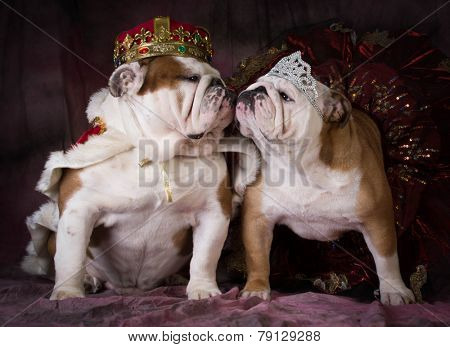 king and queen - two english bulldogs dress like a king and queen