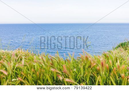 grass and seaside