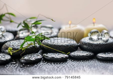 Beautiful Spa Concept Of Green Twig Passionflower With Tendril, Ice And Candles On Zen Basalt Stones