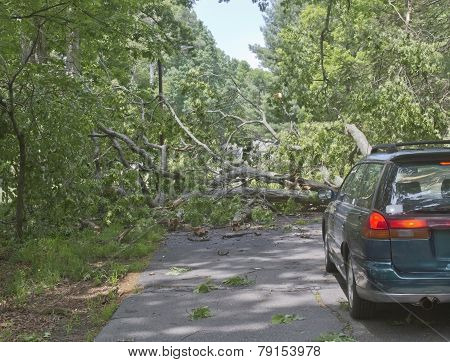 Car Confronts Fallen Tree Across A Road
