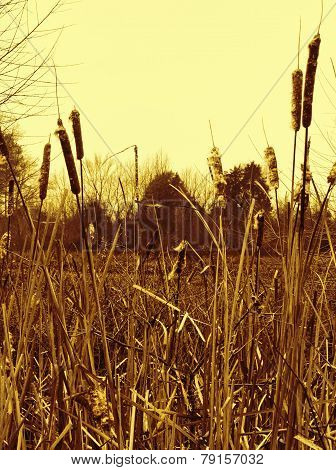 Alabama Swamp Grasses in Yellow Tones