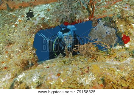 Scuba Diver Peering Out From Opening In Shipwreck - Roatan