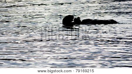 Black Lite Otter Eating Crab