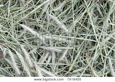 Closeup of grayish hay