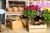 picture of flower pot  - Flowers in wooden box - JPG