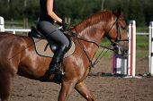pic of bridle  - Chestnut sport horse portrait in summer with bridle - JPG