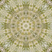 image of steppes  - Pattern of feather grass in the steppe by summer - JPG
