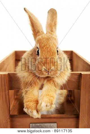 Cute brown rabbit in wooden crate isolated on white