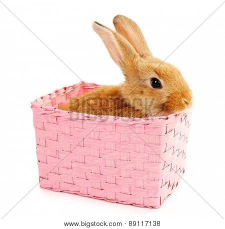Cute brown rabbit in pink wicker box isolated on white