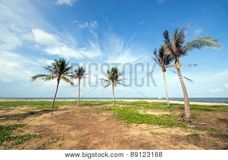 An Image Of Five Nice Palm Trees In The Blue Sunny Sky