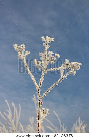 Dry grass in hoarfrost against the blue sky