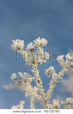 Grass in hoarfrost against the sky