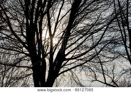 tree in the evening sun, season, change, melancholy,