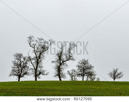 group of trees and gray sky, symbol of nature, meditation, copy space