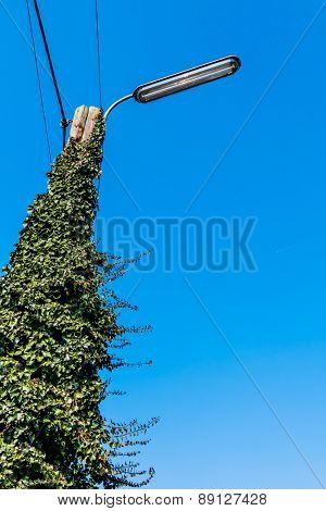 power pole street light blue sky as a symbol of power grid, green energy, alternative energy
