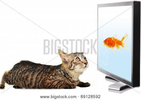Cat Looking At Fish