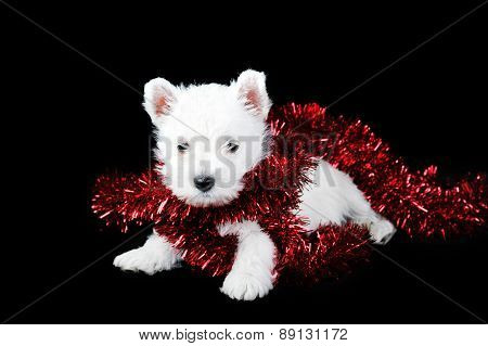White Puppy With  Garland