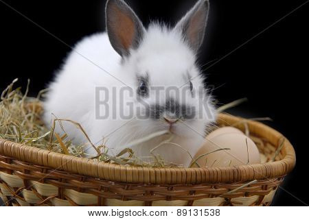 Small Rabbit And Eggs In Basket