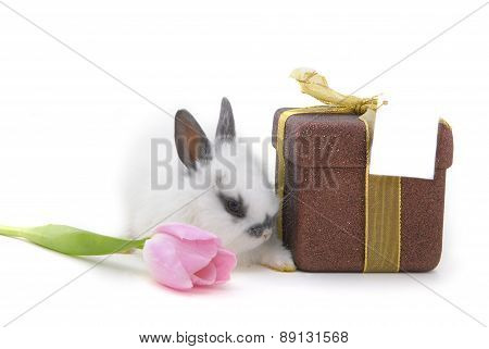 Small Rabbit With Flower And Present