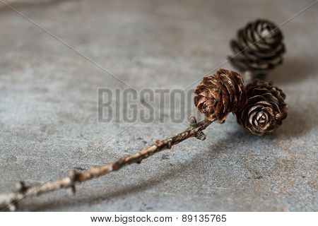 Cones On A Branch On A Gray Background