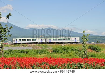 The train and the flowers