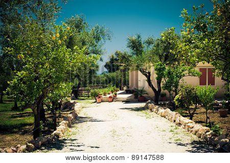 Ripe lemons hanging on a tree in Greece, little garden near house