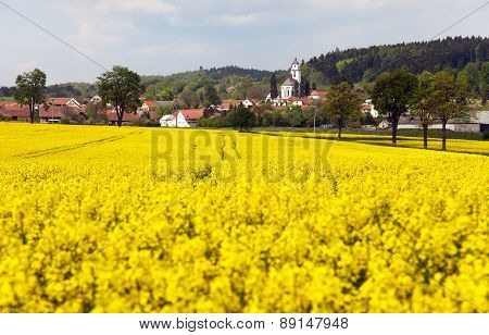 Golden Field Of Rapeseed And Netin Village