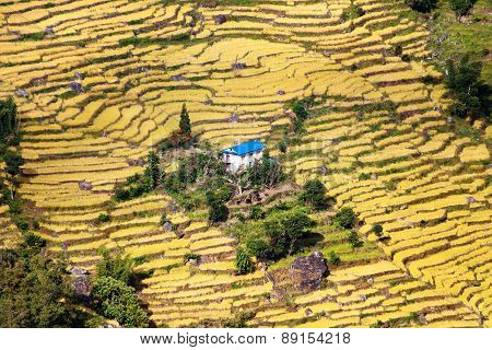 Terraced Fields Of Paddy Field And Primitive Small House