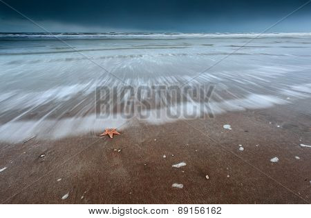 Sea Star On North Sea Coast At Storm