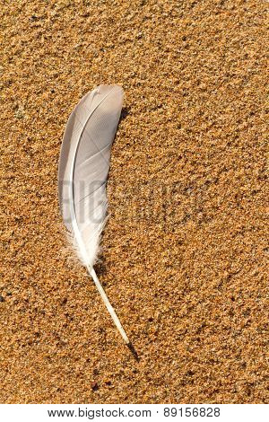 Bird Feather On A Wet Sand, Background.