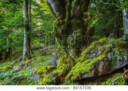 Fairy Tale Forest Covered With Moss