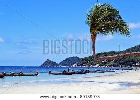 Isle  Asia In  Kho Phangan Thailand