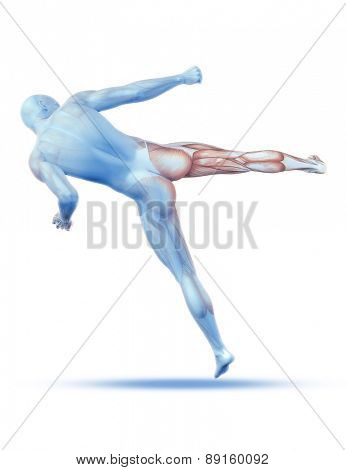 3D render of a male medical figure in kick boxing pose with partial muscle map