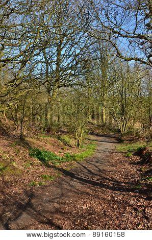 Woodland in Crossgates