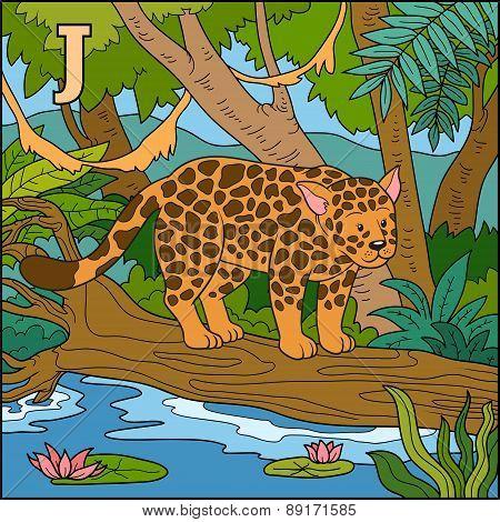 Color Alphabet For Children: Letter J (jaguar)