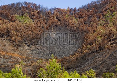 natural disaster forest fires burned trees on hill