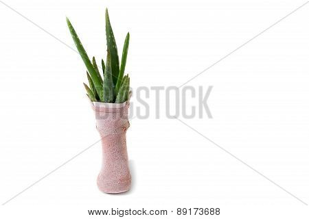 cactus in old rainboot shoe, recycle isolated on white background