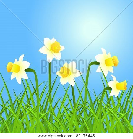 Vector Narcissus And Grass.
