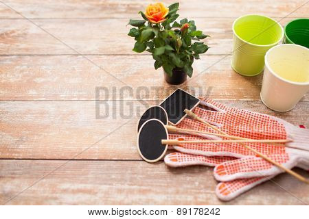 gardening and planting concept - close up of rose flower and garden tools on table at home