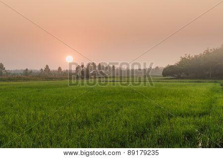 Agriculture  Area With Sunrise