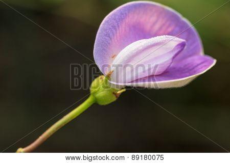 Grass Flower Purple
