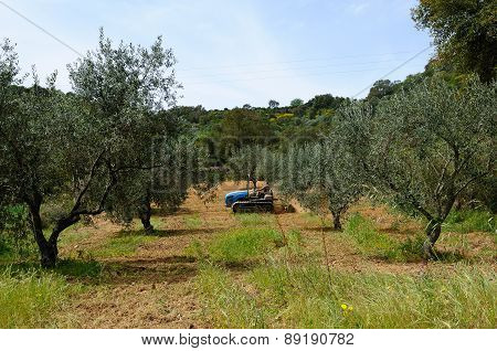 Works In The Olive Grove