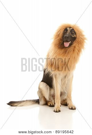 Lion or Dog?
