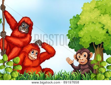 Monkey and orang-utan in the forest