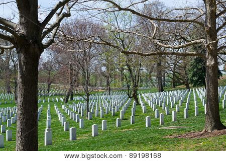Trees At The Arlington Cemetery