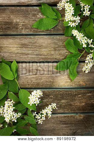 bird cherry on wooden board