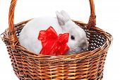 stock photo of white rabbit  - White rabbit with red ribbon in a basket isolated on white background - JPG